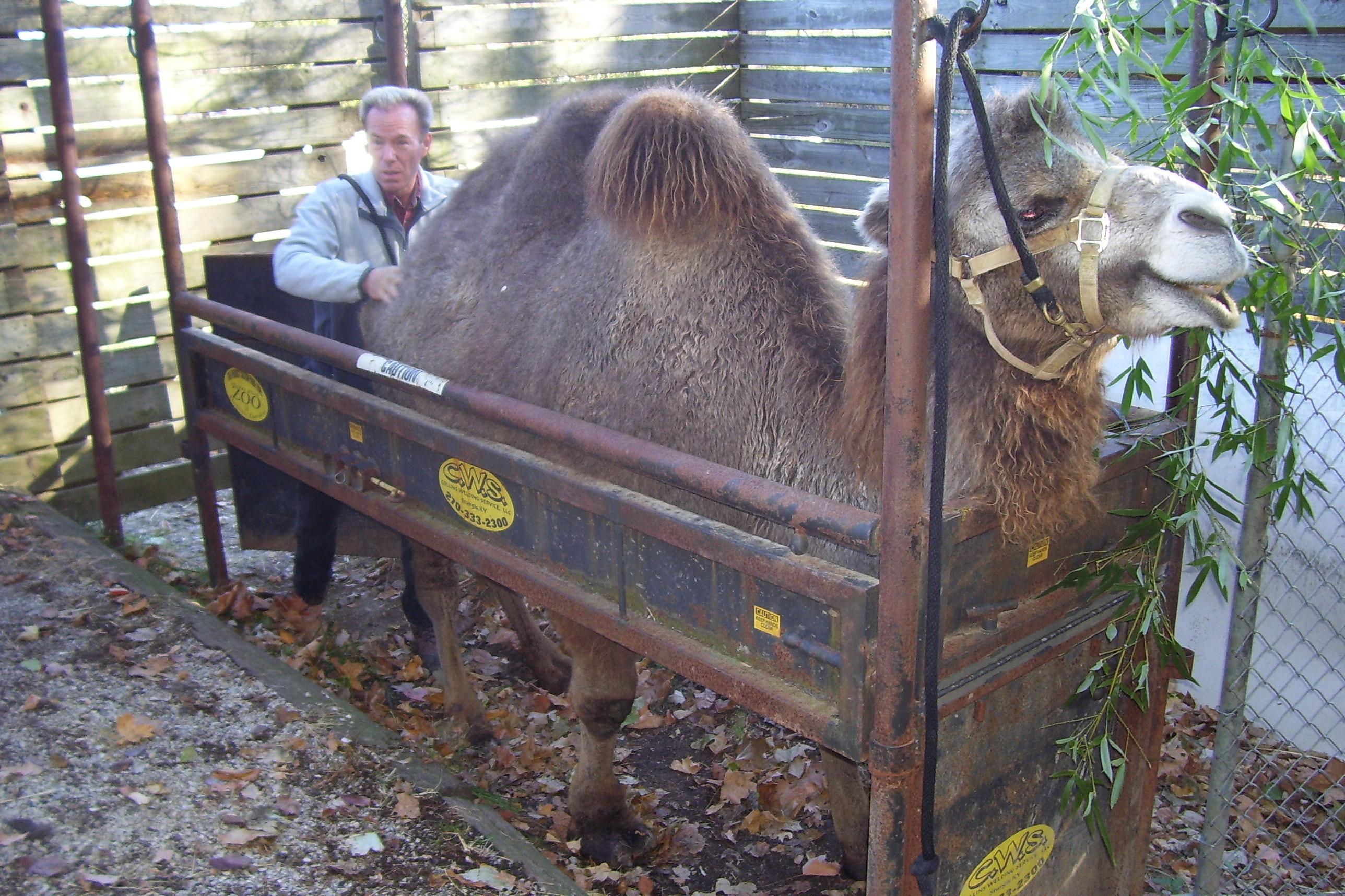 massage 24 Jylland Park Zoo rabat